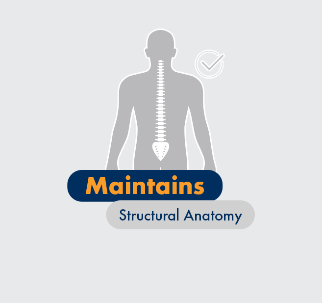 Graphic - Maintains structural anatomy, full spine